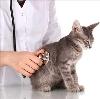 Ветеринарные клиники в Павино